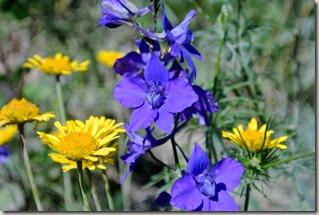 Traumpfad Pellenzer Seepfad - Blumen