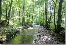 Traumpfad Saynsteig - Flusslauf