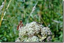 Traumpfad Virne-Burgweg - Flora und Fauna