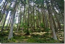 Traumpfad Virne-Burgweg - Waldpassage