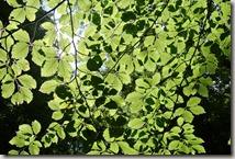 Traumpfad Virne-Burgweg - Blätter und Sonnenlicht