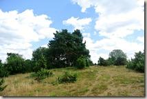 Traumpfad Virne-Burgweg - Heidehügel