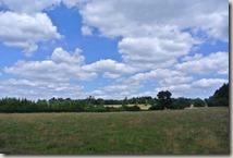 Traumpfad Virne-Burgweg - die zweite Heide