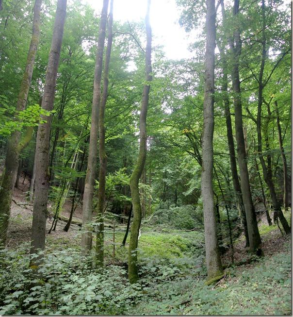 Veldenz Wanderweg Etappe 1 - Wald