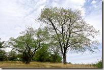 Veldenz Wanderweg Etappe 1 - Baum und Himmel