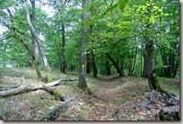 Veldenz Wanderweg Etappe 1 - Abstieg nach Ulmet