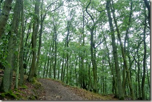 Veldenz Wanderweg Nerzweiler-Ausbacherhof - Wald