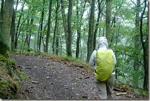 Veldenz Wanderweg Nerzweiler-Ausbacherhof - Regen im Wald