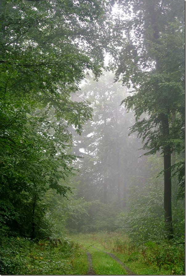 Veldenz Wanderweg Nerzweiler-Ausbacherhof - Nebel im Wald