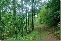 Veldenz Wanderweg - Waldweg