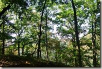 Veldenz Wanderweg - Wald