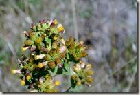 Veldenz Wanderweg - Blumen am Wegesrand