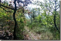 Veldenz Wanderweg - Pfad zum Mittagsfels