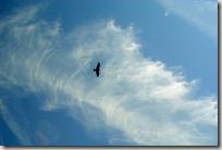 Veldenz Wanderweg - Beobachter aus der Luft