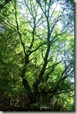 Veldenz Wanderweg - und ab und zu auch Wald
