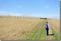 Veldenz Wanderweg - Felder, Felder, Felder