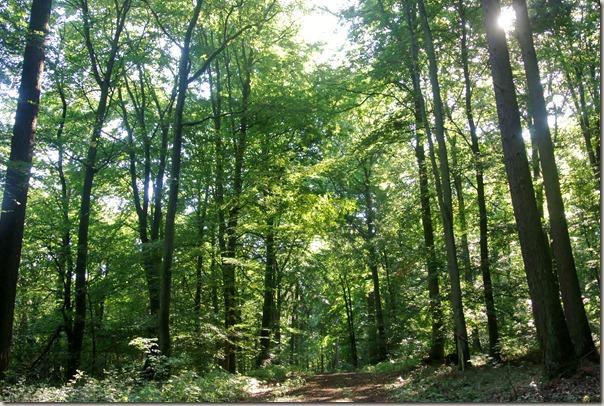 Veldenz Wanderweg Ausbacherhof-Lauterecken: Im Wald