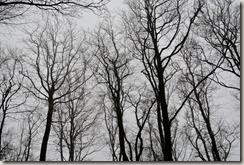 Rhön Kreuzbergtour 2016 - kahle Bäume