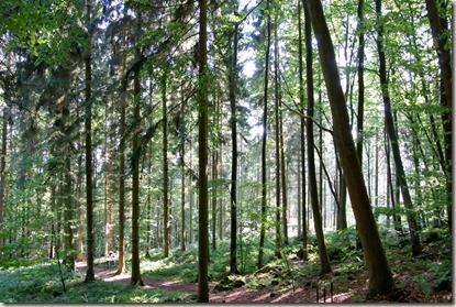 Traumpfad Vulkanpfad 2015 - Herbstwald