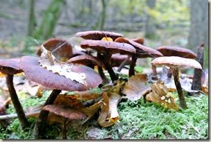 Traumschleife Marienberg - noch mehr Pilze