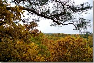Traumschleife Marienberg - Herbstwald
