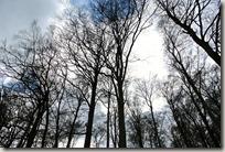 Traumpfad Booser Doppelmaartour -grauer Himmel im Wald