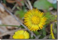 Traumpfad Booser Doppelmaartour - erste Blüten