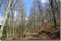Traumpfad Booser Doppelmaartour - Waldweg