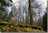 Traumpfad Booser Doppelmaartour - Lichtspiel im Wald