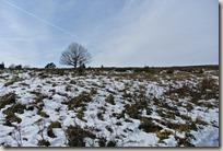 Traumpfad Wacholderweg - Heide unter Schnee