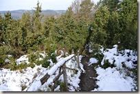 Traumpfad Wacholderweg - Weg durch die Heide