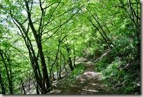Traumpfad Höhlen- und Schluchtensteig - Aufstieg im Wald