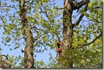 Traumpfad Höhlen- und Schluchtensteig - Eichhörnchen 1