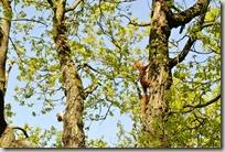 Traumpfad Höhlen- und Schluchtensteig - Eichhörnchen 2