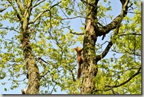 Traumpfad Höhlen- und Schluchtensteig - Eichhörnchen 3