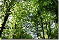 Traumpfad Förstersteig - Holzsteg in den Bäumen