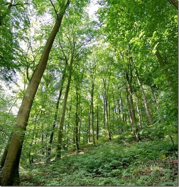 Traumpfad Förstersteig - Wald Wald Wald