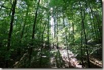 Traumpfad Förstersteig - Sonnenlicht im Wald