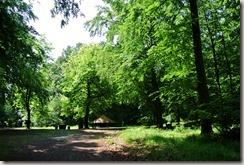 Traumpfad Förstersteig - Lichtung im Wald
