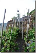 Calmont Klettersteig - Leiter zwischen Weinreben