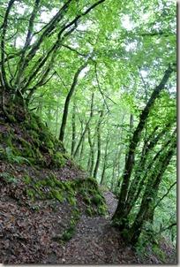 Calmont Klettersteig - Waldpfad