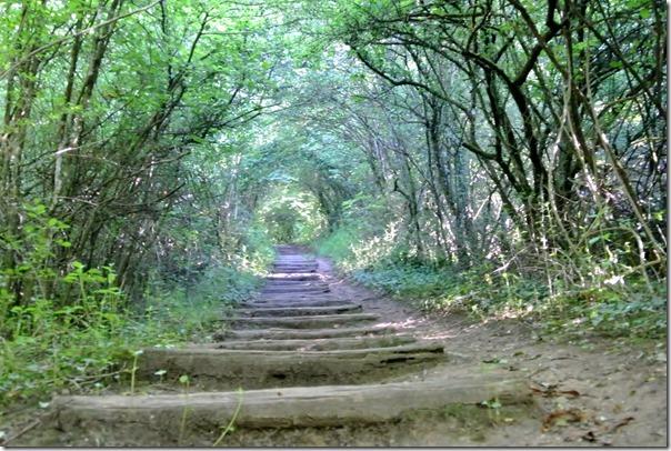 Moselsteig Etappe 1 - Morgenlicht im Wald