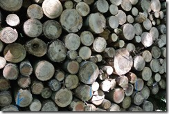 Moselsteig Etappe 1 - Holz