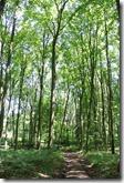 Moselsteig Etappe 1 - Waldabschnitt