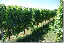 Moselsteig Etappe 1 - Wein, Wein, Wein