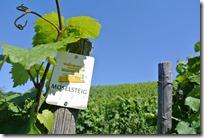 Moselsteig Palzem - Nittel - Weinreben und Moselsteiglogo