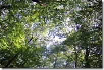 Moselsteig Palzem - Nittel - Blätterdach