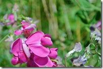 Moselsteig Palzem - Nittel - Blumen