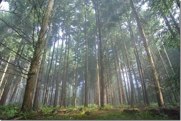Moselsteig Konz - Trier - Wald
