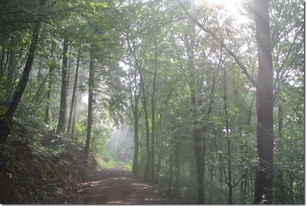 Moselsteig Konz - Trier - Nebel im Wald